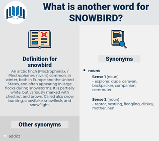 snowbird, synonym snowbird, another word for snowbird, words like snowbird, thesaurus snowbird