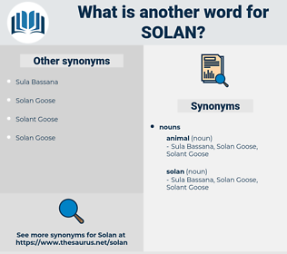 solan, synonym solan, another word for solan, words like solan, thesaurus solan