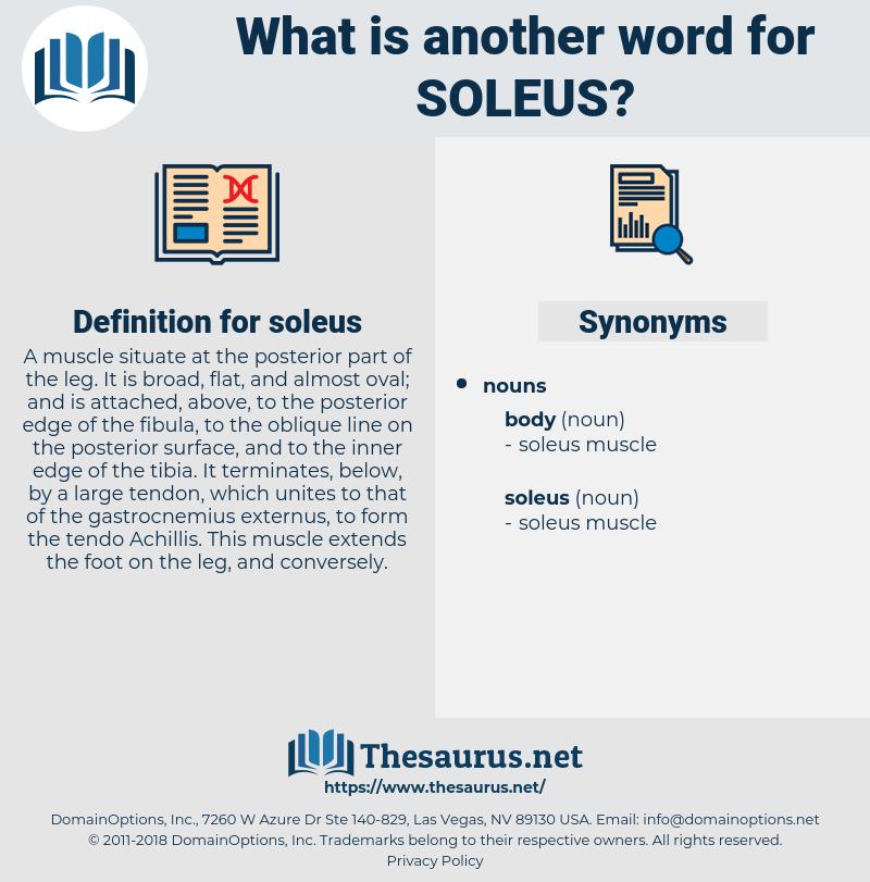 soleus, synonym soleus, another word for soleus, words like soleus, thesaurus soleus