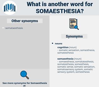somaesthesia, synonym somaesthesia, another word for somaesthesia, words like somaesthesia, thesaurus somaesthesia