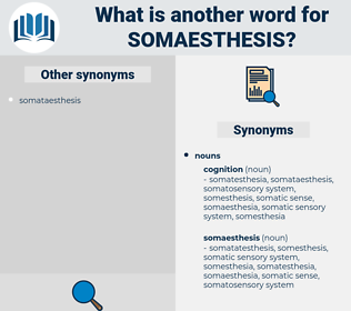 somaesthesis, synonym somaesthesis, another word for somaesthesis, words like somaesthesis, thesaurus somaesthesis
