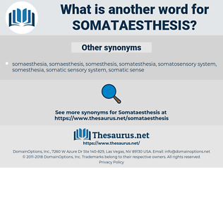somataesthesis, synonym somataesthesis, another word for somataesthesis, words like somataesthesis, thesaurus somataesthesis
