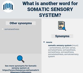 somatic sensory system, synonym somatic sensory system, another word for somatic sensory system, words like somatic sensory system, thesaurus somatic sensory system