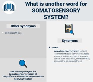 somatosensory system, synonym somatosensory system, another word for somatosensory system, words like somatosensory system, thesaurus somatosensory system