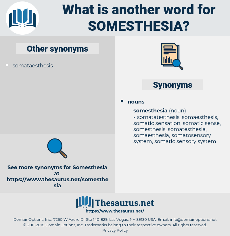 somesthesia, synonym somesthesia, another word for somesthesia, words like somesthesia, thesaurus somesthesia