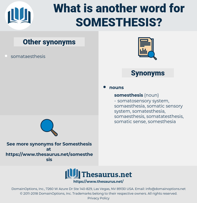 somesthesis, synonym somesthesis, another word for somesthesis, words like somesthesis, thesaurus somesthesis