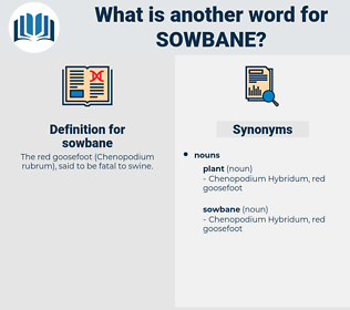 sowbane, synonym sowbane, another word for sowbane, words like sowbane, thesaurus sowbane
