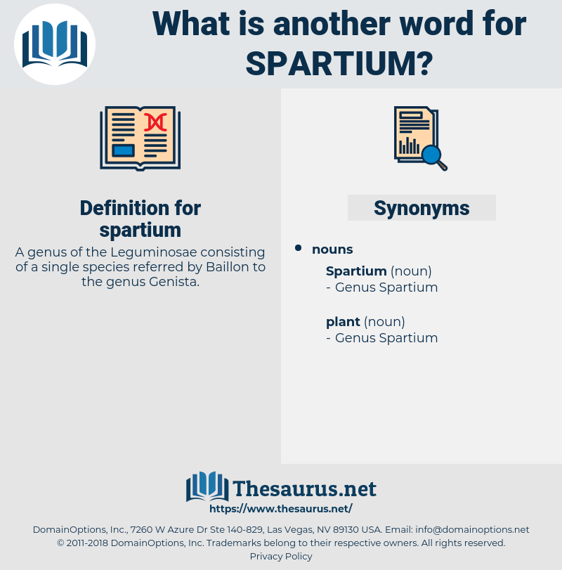 spartium, synonym spartium, another word for spartium, words like spartium, thesaurus spartium
