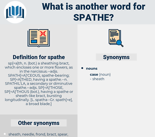 spathe, synonym spathe, another word for spathe, words like spathe, thesaurus spathe