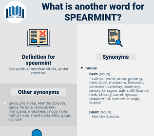 spearmint, synonym spearmint, another word for spearmint, words like spearmint, thesaurus spearmint