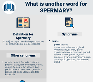 Spermary, synonym Spermary, another word for Spermary, words like Spermary, thesaurus Spermary