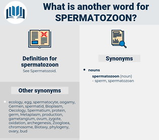 spermatozoon, synonym spermatozoon, another word for spermatozoon, words like spermatozoon, thesaurus spermatozoon