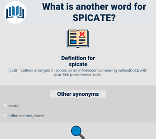 spicate, synonym spicate, another word for spicate, words like spicate, thesaurus spicate
