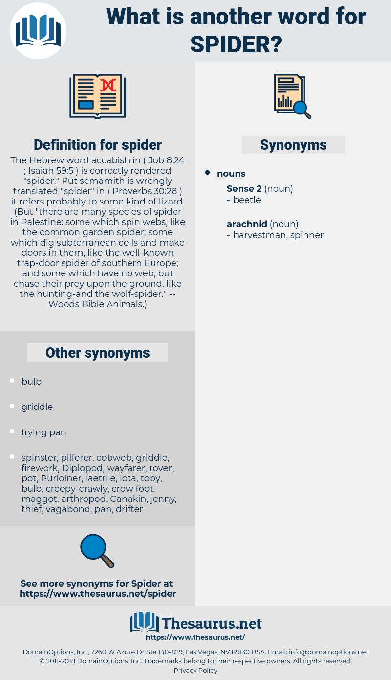 spider, synonym spider, another word for spider, words like spider, thesaurus spider