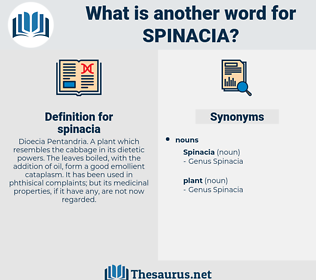 spinacia, synonym spinacia, another word for spinacia, words like spinacia, thesaurus spinacia
