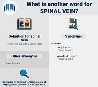 spinal vein, synonym spinal vein, another word for spinal vein, words like spinal vein, thesaurus spinal vein