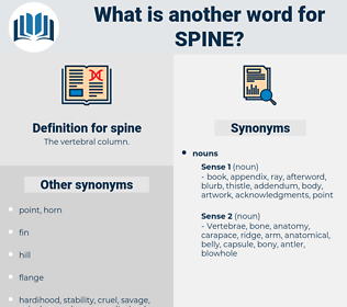 spine, synonym spine, another word for spine, words like spine, thesaurus spine