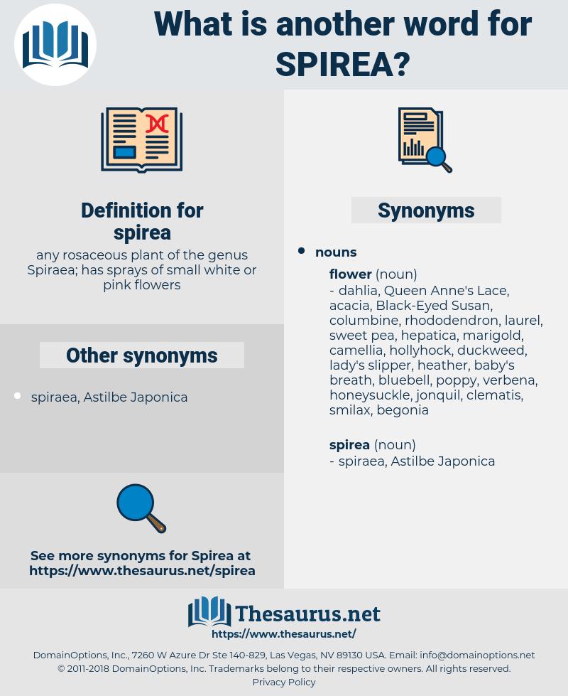 spirea, synonym spirea, another word for spirea, words like spirea, thesaurus spirea