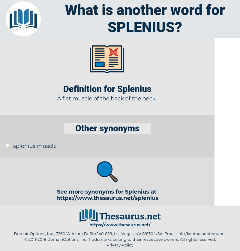 Splenius, synonym Splenius, another word for Splenius, words like Splenius, thesaurus Splenius