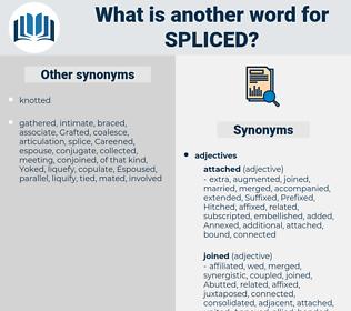Spliced, synonym Spliced, another word for Spliced, words like Spliced, thesaurus Spliced