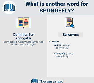 spongefly, synonym spongefly, another word for spongefly, words like spongefly, thesaurus spongefly