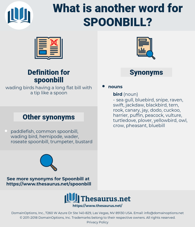 spoonbill, synonym spoonbill, another word for spoonbill, words like spoonbill, thesaurus spoonbill