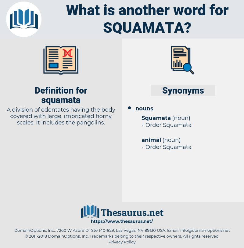 squamata, synonym squamata, another word for squamata, words like squamata, thesaurus squamata