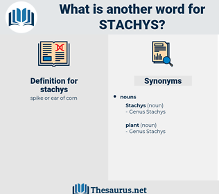 stachys, synonym stachys, another word for stachys, words like stachys, thesaurus stachys