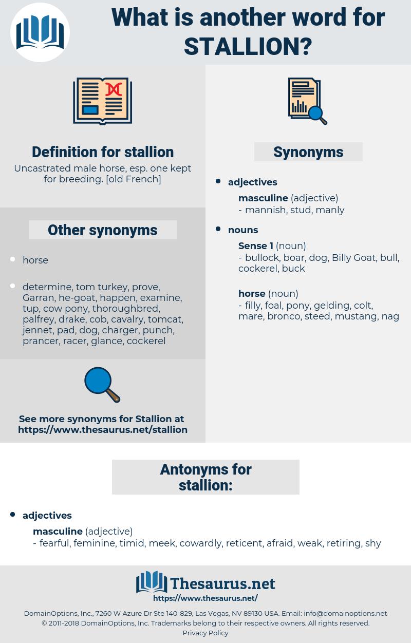 stallion, synonym stallion, another word for stallion, words like stallion, thesaurus stallion