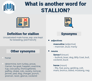 stallion, synonym stallion, another word for stallion, words like stallion, thesaurus stallion