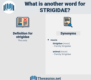strigidae, synonym strigidae, another word for strigidae, words like strigidae, thesaurus strigidae