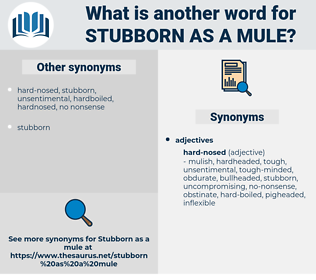 stubborn as a mule, synonym stubborn as a mule, another word for stubborn as a mule, words like stubborn as a mule, thesaurus stubborn as a mule