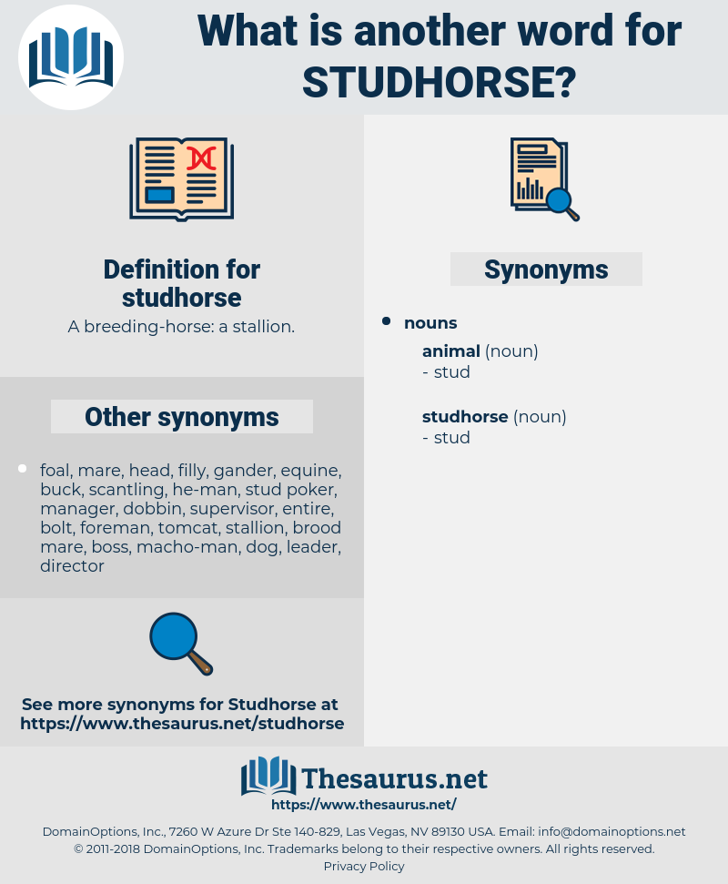 studhorse, synonym studhorse, another word for studhorse, words like studhorse, thesaurus studhorse