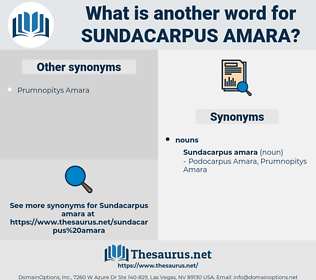 Sundacarpus Amara, synonym Sundacarpus Amara, another word for Sundacarpus Amara, words like Sundacarpus Amara, thesaurus Sundacarpus Amara