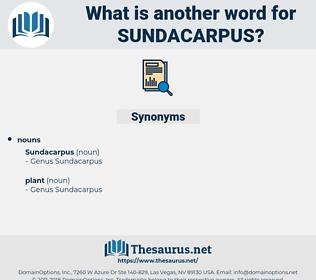 sundacarpus, synonym sundacarpus, another word for sundacarpus, words like sundacarpus, thesaurus sundacarpus