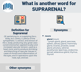 Suprarenal, synonym Suprarenal, another word for Suprarenal, words like Suprarenal, thesaurus Suprarenal