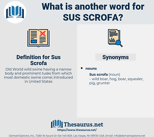 Sus Scrofa, synonym Sus Scrofa, another word for Sus Scrofa, words like Sus Scrofa, thesaurus Sus Scrofa