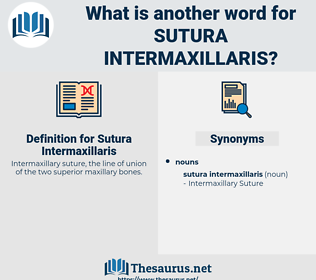 Sutura Intermaxillaris, synonym Sutura Intermaxillaris, another word for Sutura Intermaxillaris, words like Sutura Intermaxillaris, thesaurus Sutura Intermaxillaris