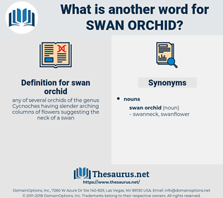 swan orchid, synonym swan orchid, another word for swan orchid, words like swan orchid, thesaurus swan orchid