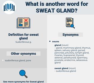 sweat gland, synonym sweat gland, another word for sweat gland, words like sweat gland, thesaurus sweat gland