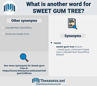 sweet gum tree, synonym sweet gum tree, another word for sweet gum tree, words like sweet gum tree, thesaurus sweet gum tree