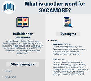 sycamore, synonym sycamore, another word for sycamore, words like sycamore, thesaurus sycamore