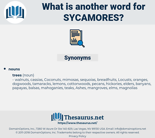 sycamores, synonym sycamores, another word for sycamores, words like sycamores, thesaurus sycamores