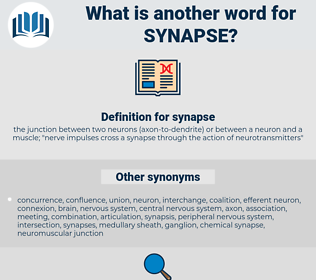 synapse, synonym synapse, another word for synapse, words like synapse, thesaurus synapse