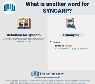 syncarp, synonym syncarp, another word for syncarp, words like syncarp, thesaurus syncarp