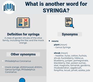 syringa, synonym syringa, another word for syringa, words like syringa, thesaurus syringa