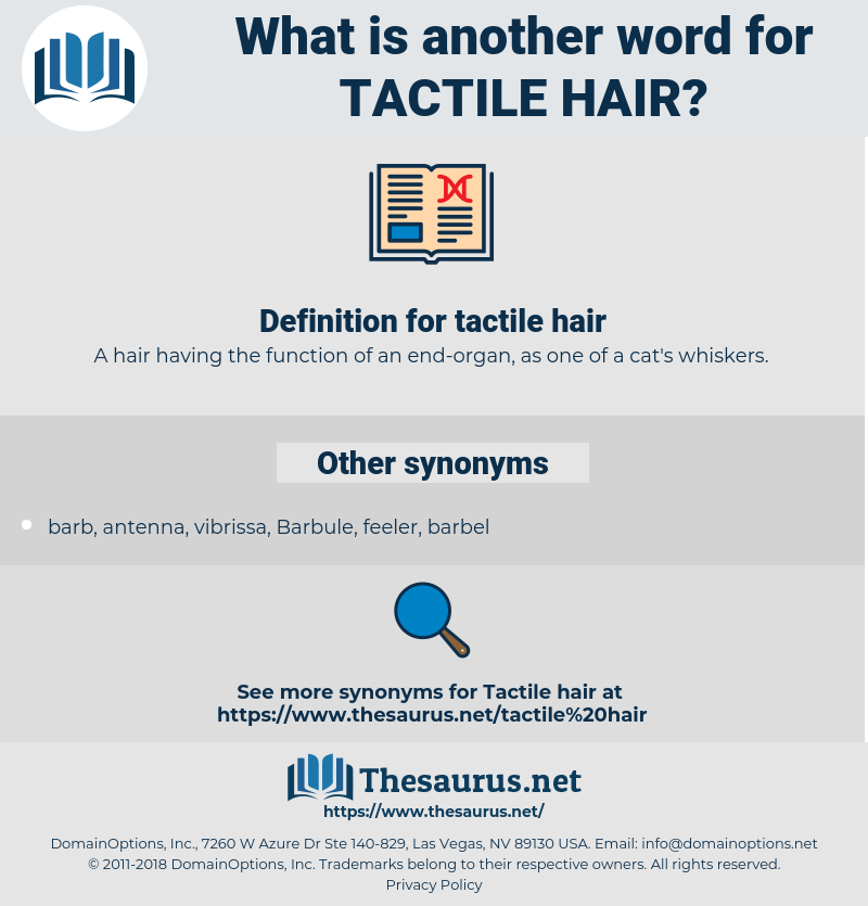 tactile hair, synonym tactile hair, another word for tactile hair, words like tactile hair, thesaurus tactile hair