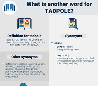 tadpole, synonym tadpole, another word for tadpole, words like tadpole, thesaurus tadpole
