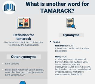 tamarack, synonym tamarack, another word for tamarack, words like tamarack, thesaurus tamarack