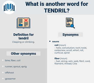 tendril, synonym tendril, another word for tendril, words like tendril, thesaurus tendril